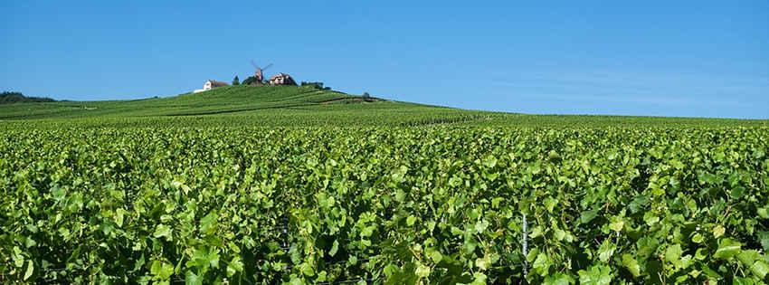 Appellations et vignobles de France