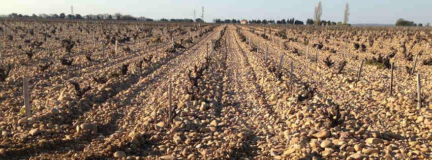 galets roulés dans les vignes de Châteauneuf-du-Pape